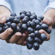 OPC - Weintraubenkernextrakt immer beliebter unter ernährungsbewussten Anwendern