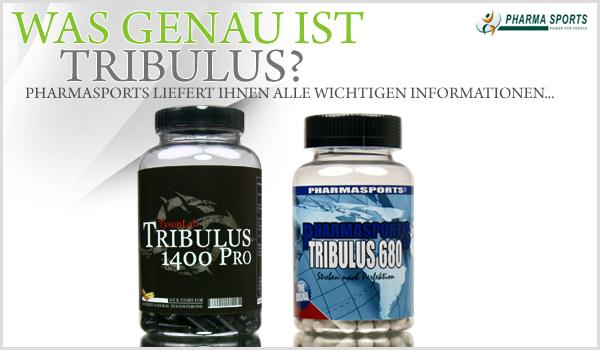 Was ist Tribulus Terrestris und was kann es? Pharmasports informiert...